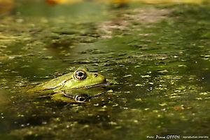 Verte sur fond vert
