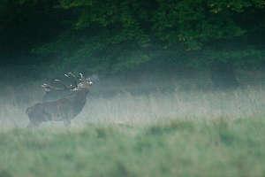 septembre 2014 - Bêtes à cornes