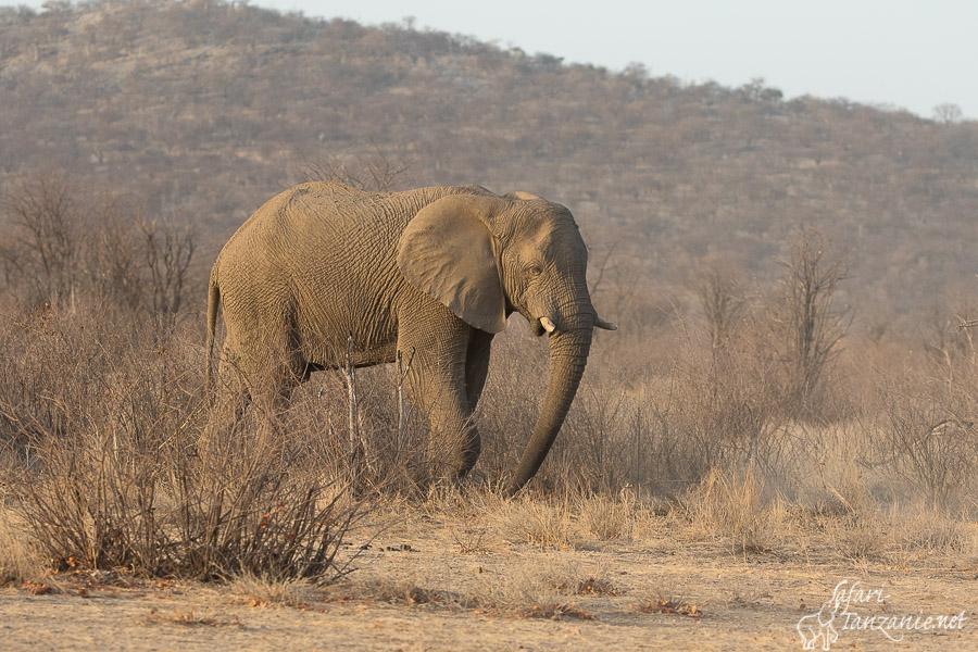elephant-8353.jpg