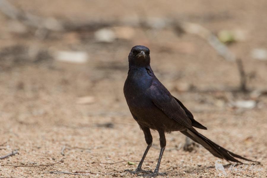 Namibie-263.jpg