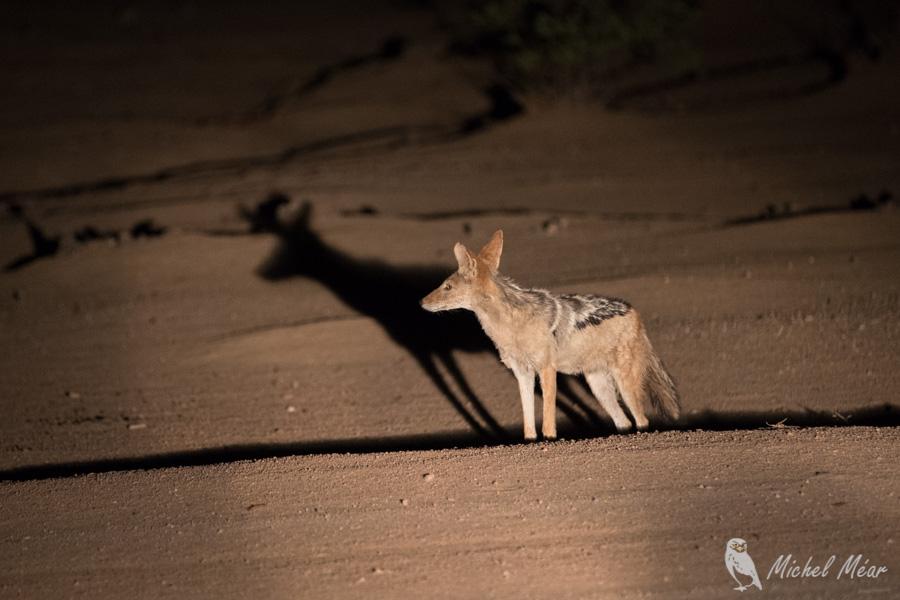 Namibie-271.jpg