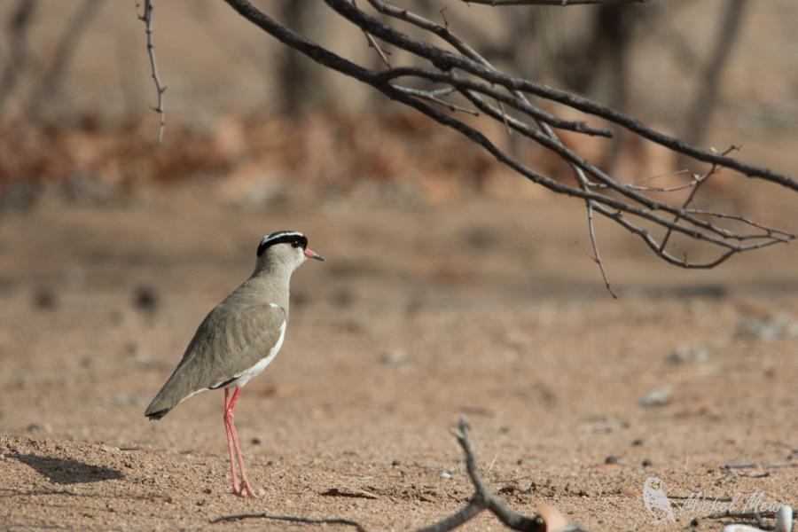 Namibie-278.jpg