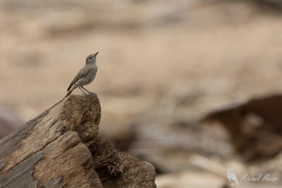Namibie-308.jpg