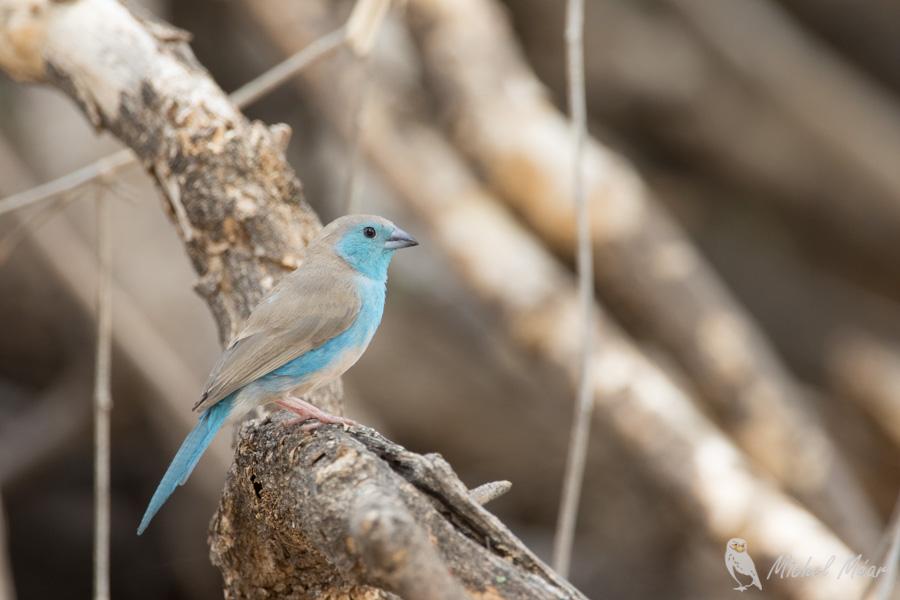 Namibie-315.jpg