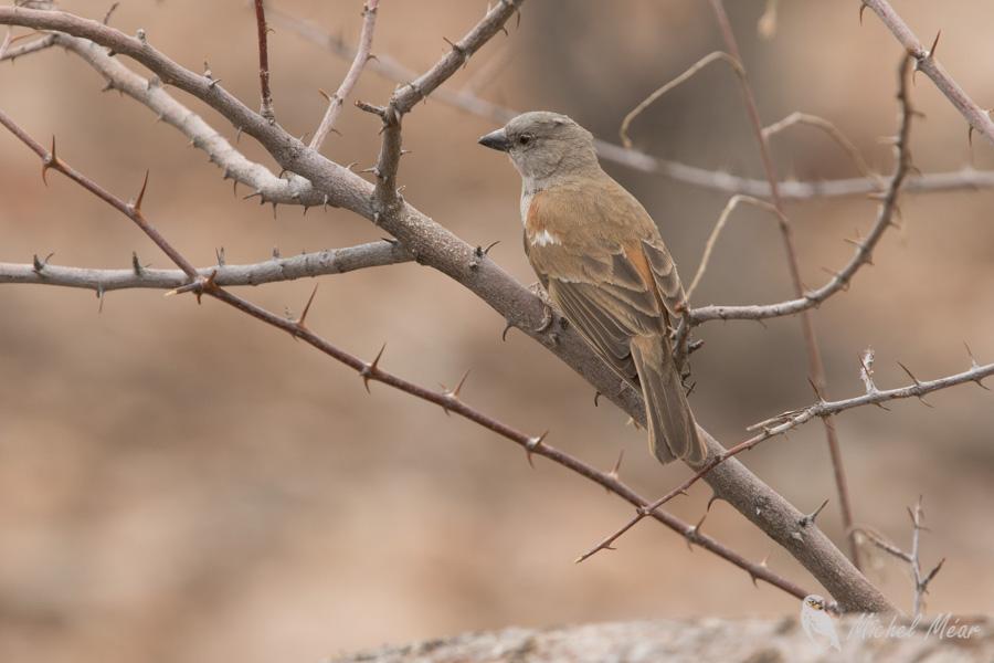 Namibie-329.jpg