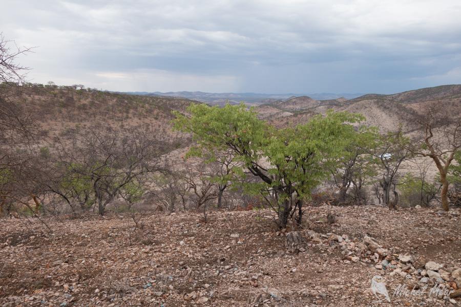 Namibie-330.jpg