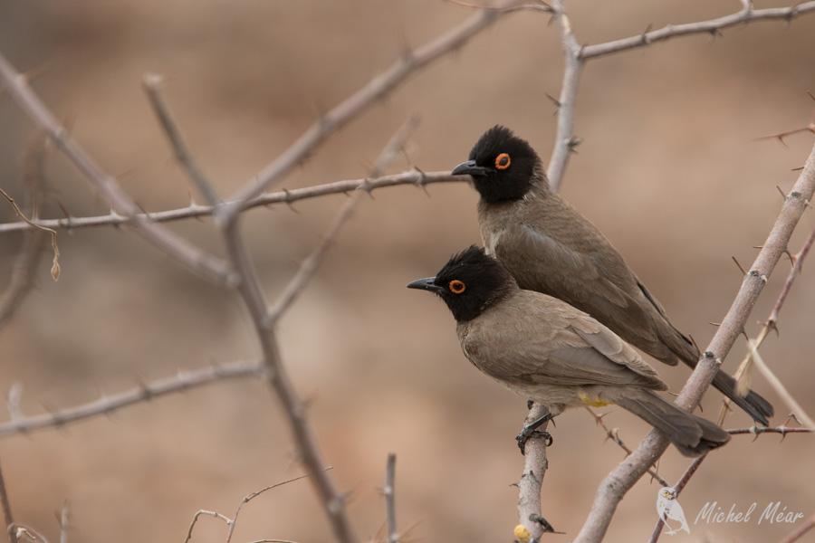Namibie-333.jpg