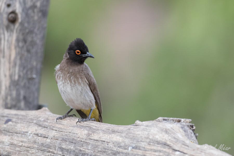 Namibie-345.jpg