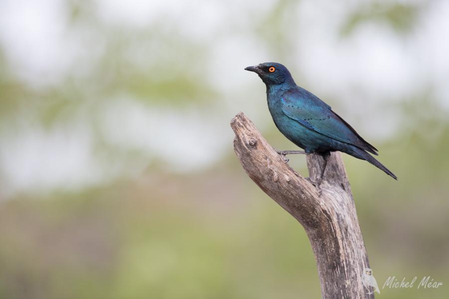 Namibie-346.jpg