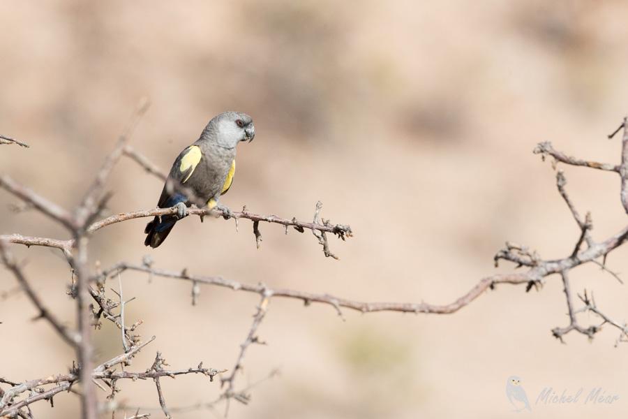Namibie-349.jpg