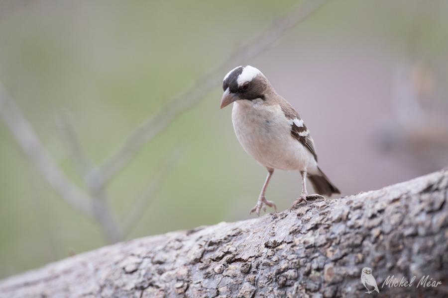 Namibie-376.jpg
