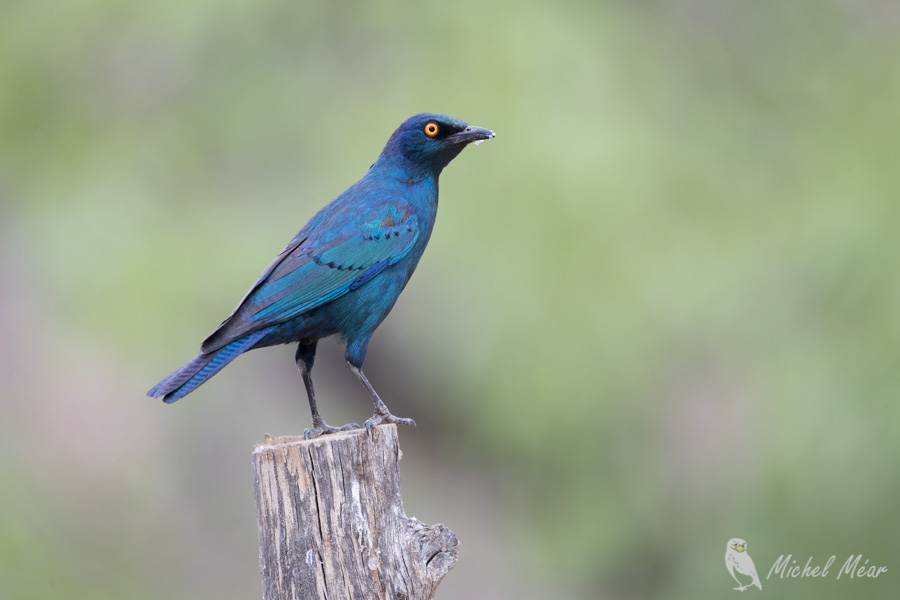 Namibie-377.jpg