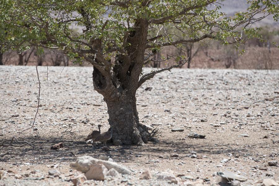Namibie-384.jpg