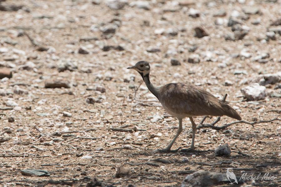 Namibie-386.jpg