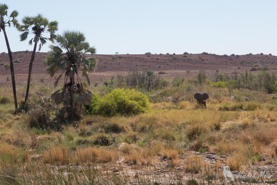 Namibie-389.jpg