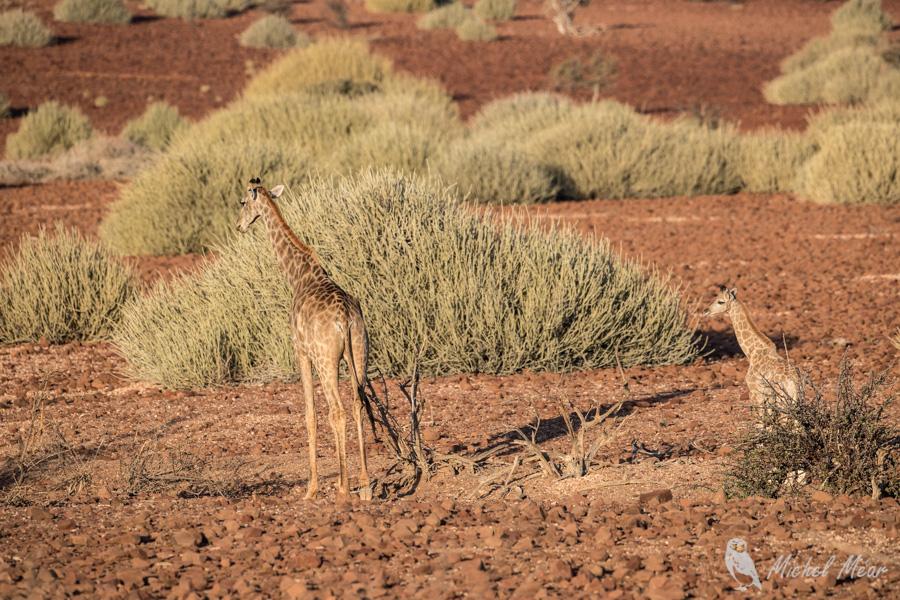 Namibie-397.jpg