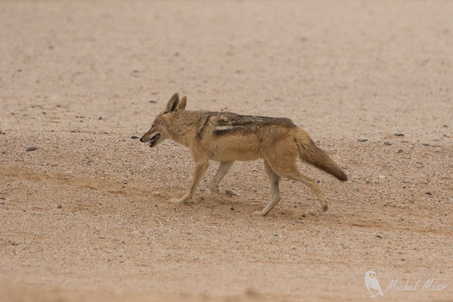 Namibie-432.jpg