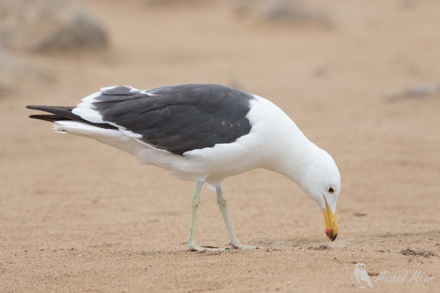 Namibie-435.jpg