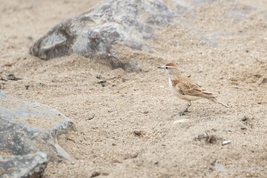 Namibie-444.jpg