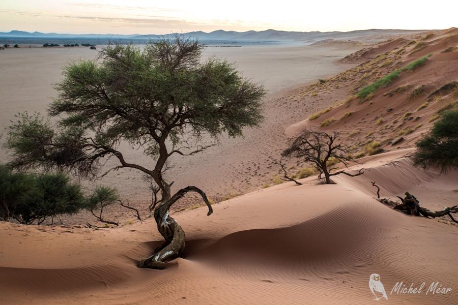 Namibie-570.jpg