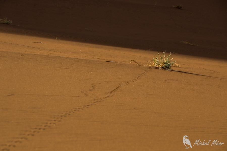 Namibie-592.jpg