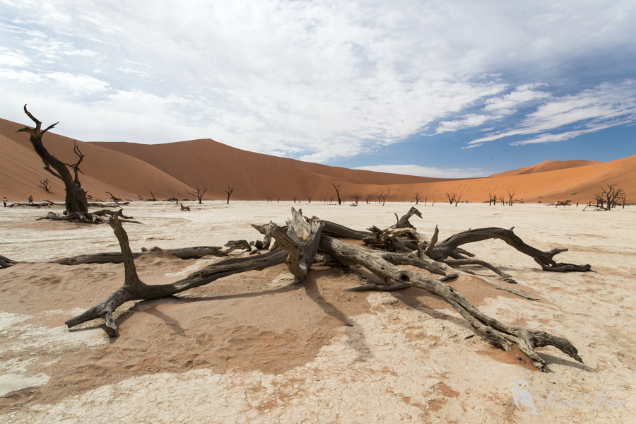 Namibie-601.jpg