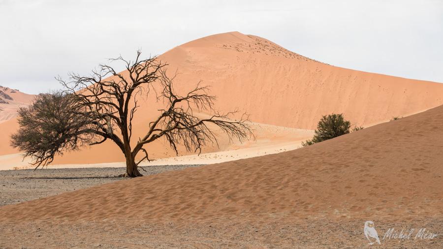 Namibie-604.jpg