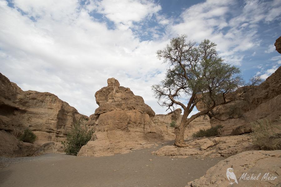 Namibie-615.jpg