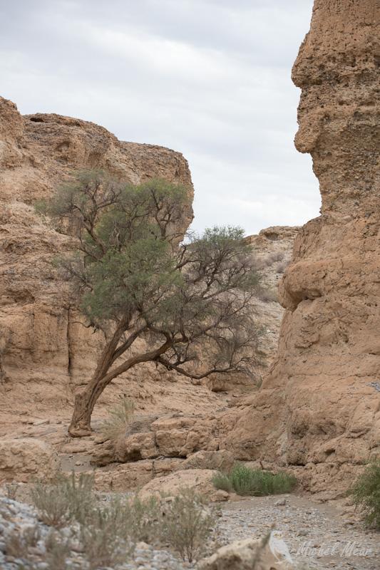 Namibie-617.jpg