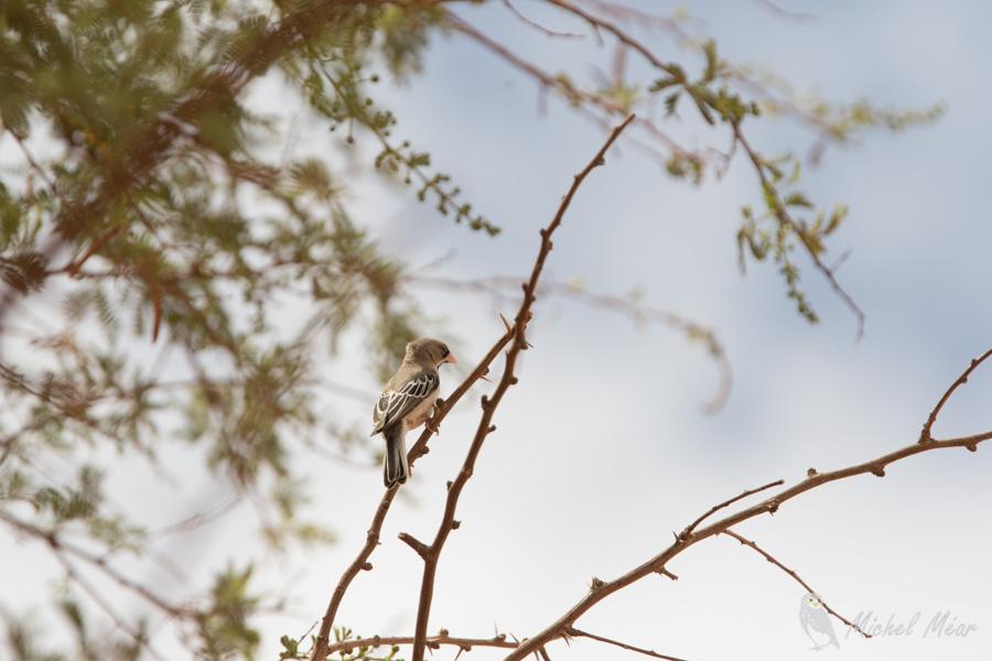 Namibie-637.jpg