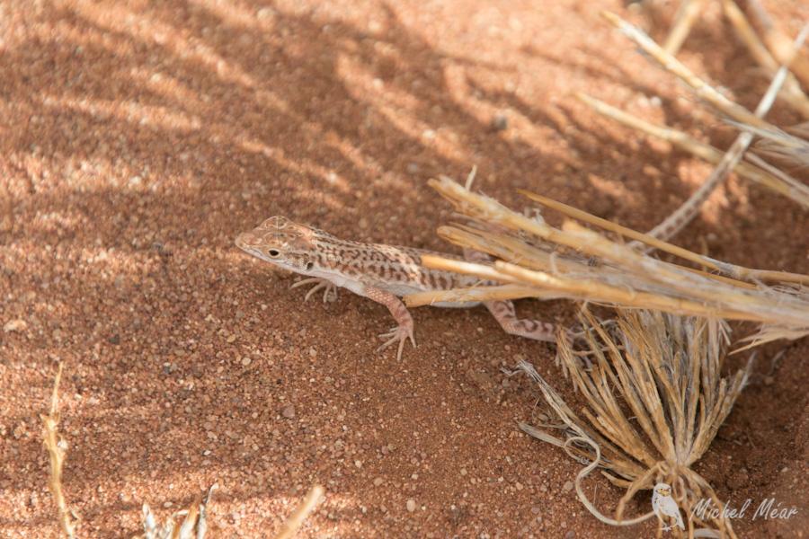 Namibie-640.jpg
