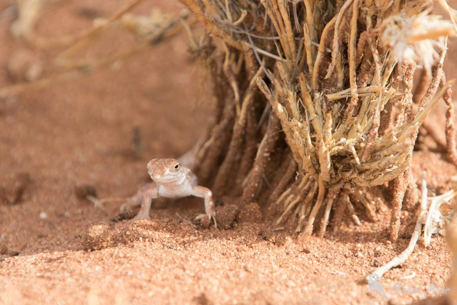 Namibie-641.jpg