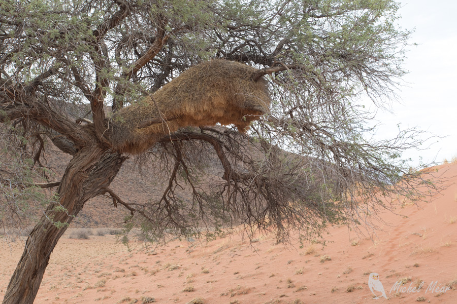 Namibie-646.jpg