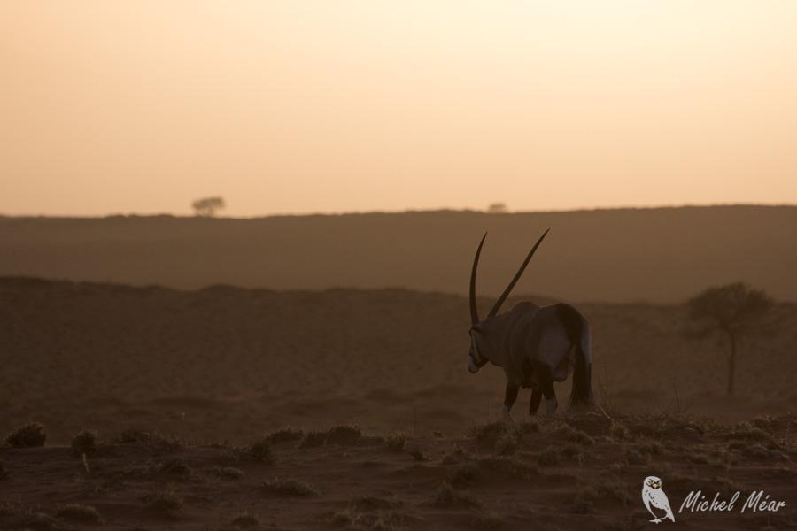 Namibie-660.jpg