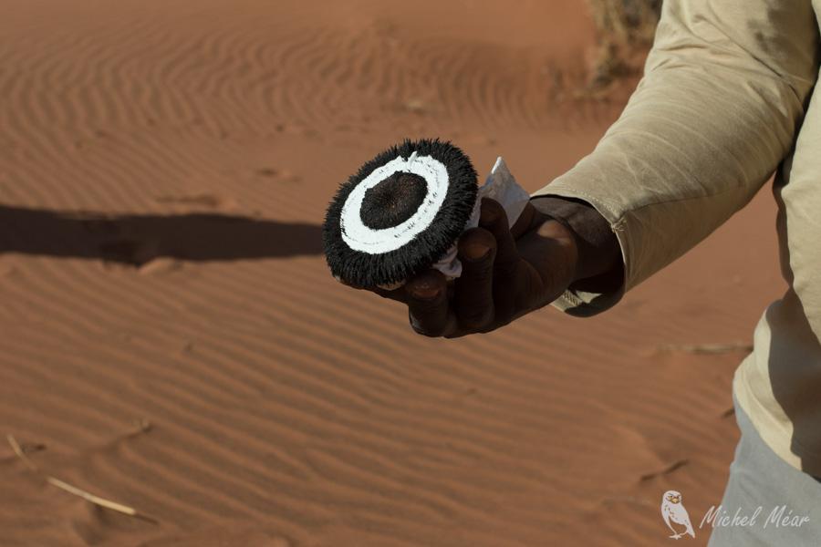 Namibie-666.jpg