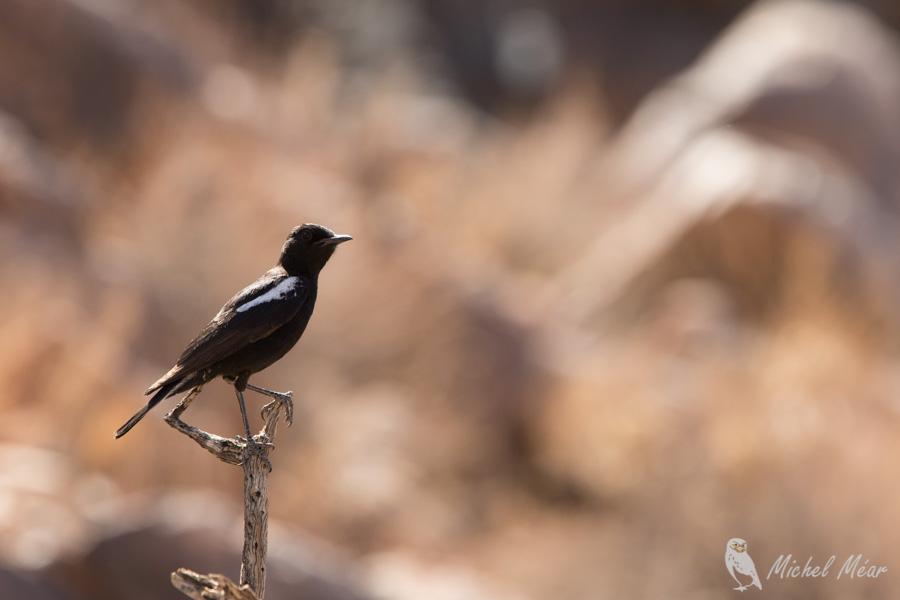 Namibie-669.jpg