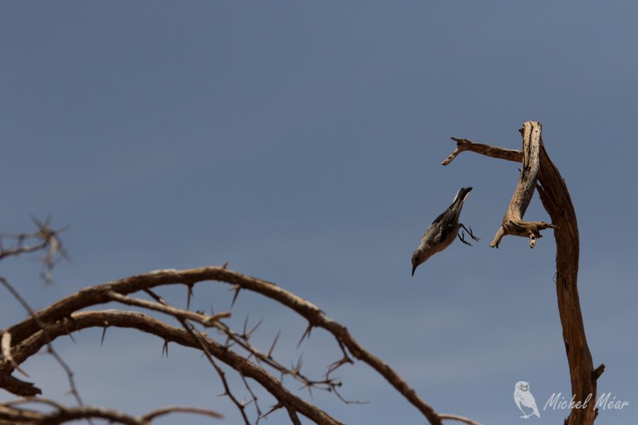 Namibie-681.jpg