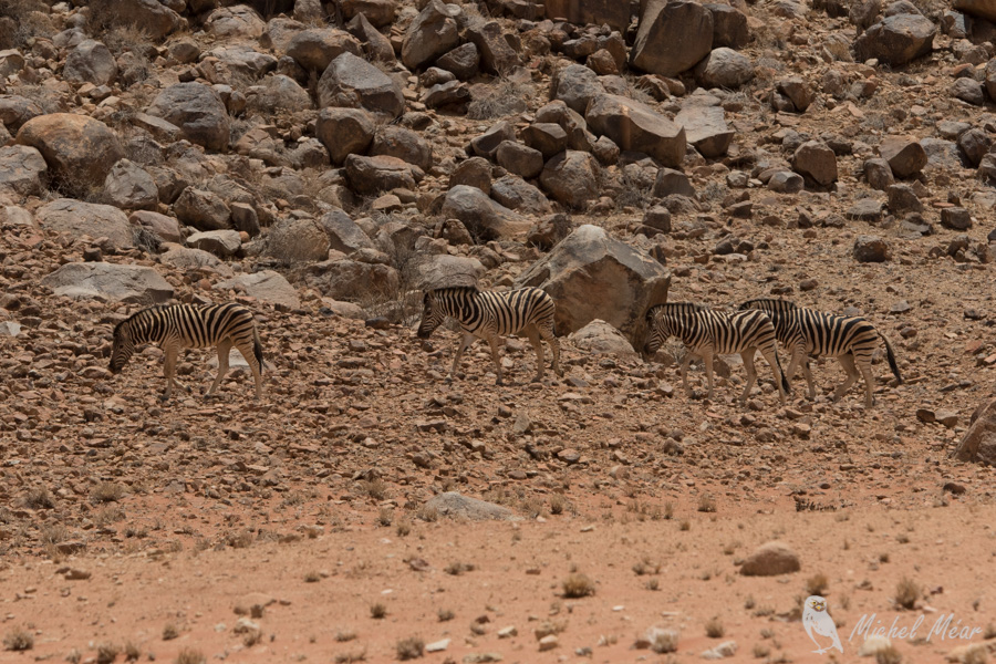 Namibie-683.jpg