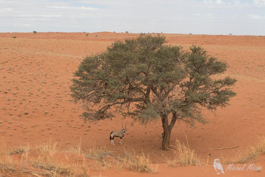 Namibie-684.jpg