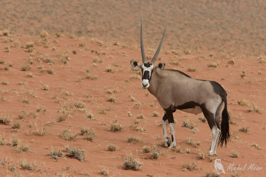 Namibie-685.jpg