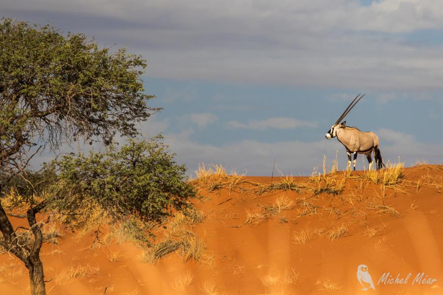 Namibie-686.jpg