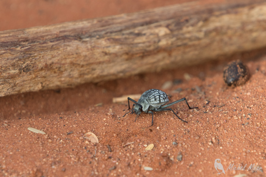 Namibie-689.jpg