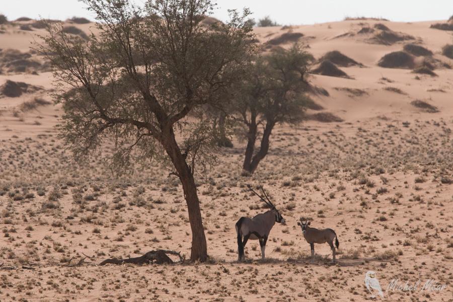 Namibie-700.jpg