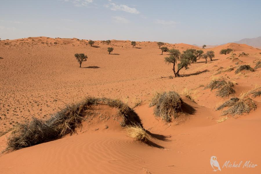 Namibie-702.jpg