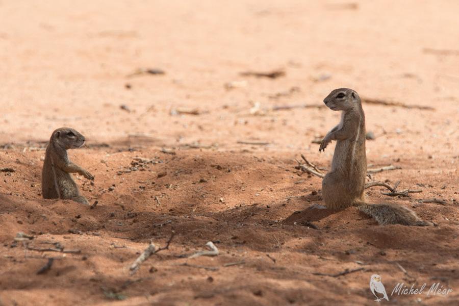 Namibie-703.jpg