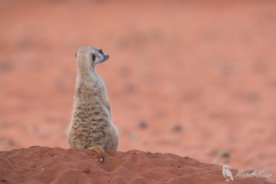 Namibie-704.jpg