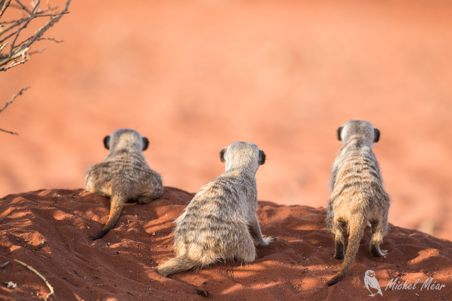 Namibie-705.jpg