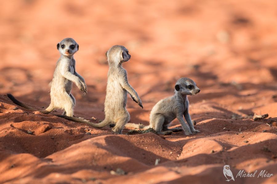 Namibie-706.jpg
