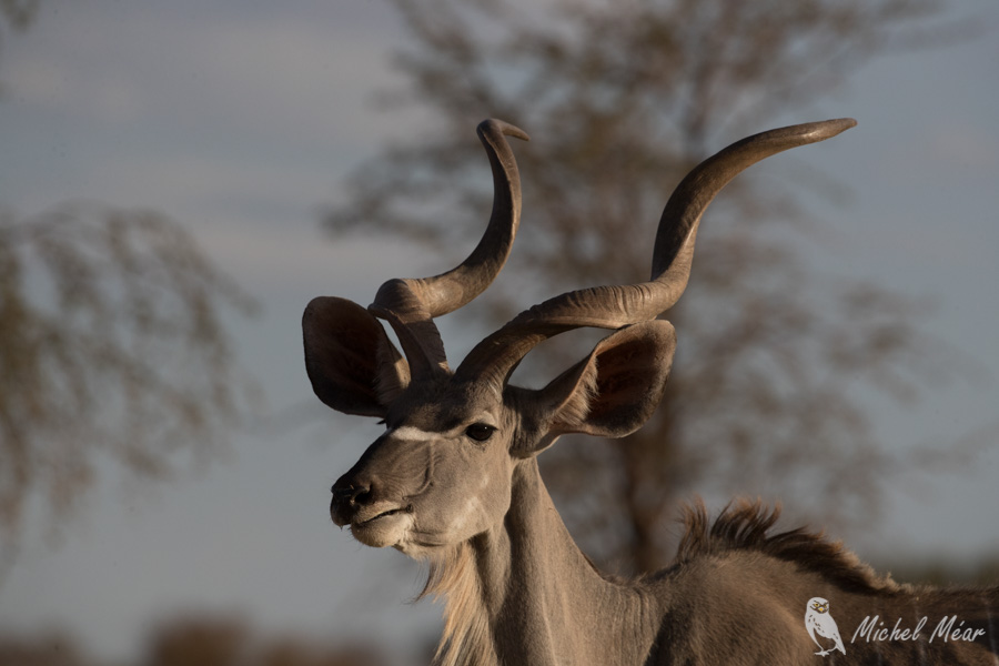 Namibie-708.jpg