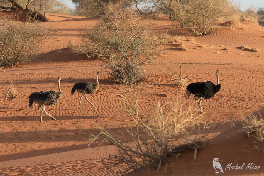 Namibie-710.jpg